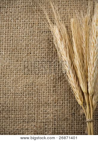 wheat grain and sack as background texture