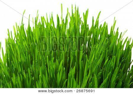 wheatgrass aislado sobre un fondo blanco