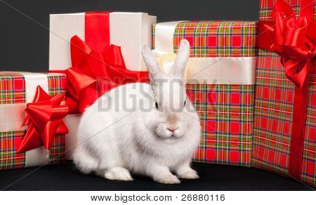 Image of fluffy rabbit rounded by gift boxes with red bows