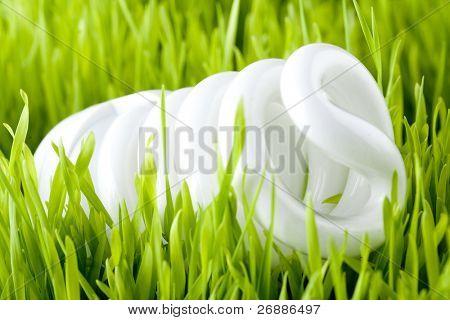 light bulb on a fresh grass