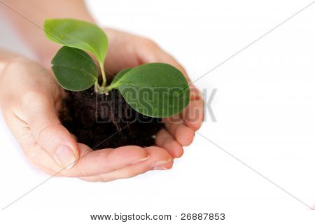 Isolated shot of a fresh shoot, growing from a small pile of earth held in hands.