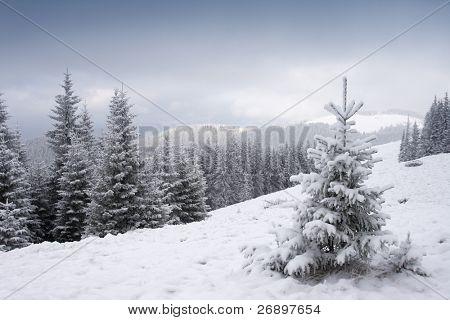 View of christmas tree through snow
