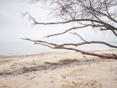 Abandoned Beach With Branch On Sand And Sea Water During Winter Day. Summertime Landscapes Concept. poster