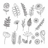 Vector Hand Drawn Collection Herbs And Flowers. Botany. Set. Monochrome Vector Illustrations. Vintag poster