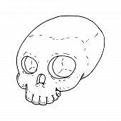 Human Skull. Vector Illustration Of A Human Skull. Hand Drawn Human Skull. poster