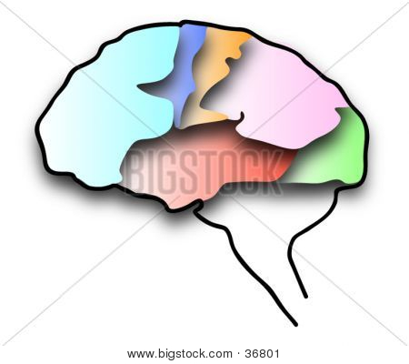 HUMAN BRAIN COLOR