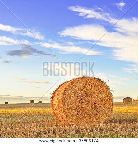Rolo de feno, campo, pôr do sol e céu azul. Tuscany