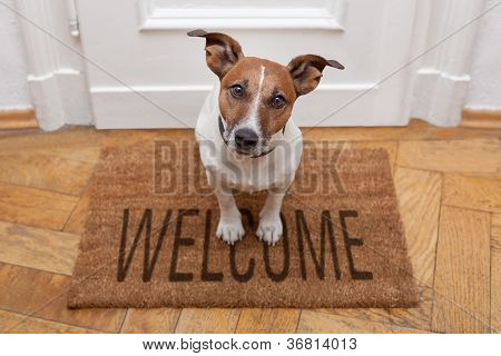 Perro Welcome Home
