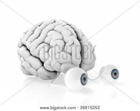 Gehirn mit Augen
