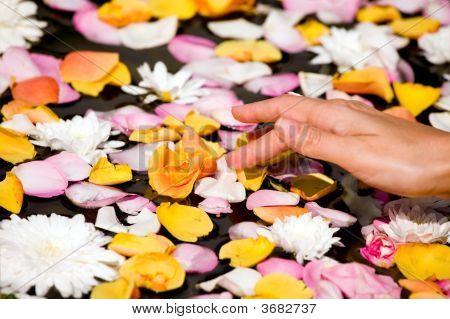 Woman Touching Flower Petals