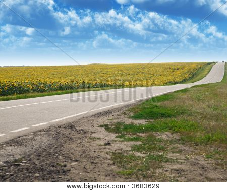 Highway And Field