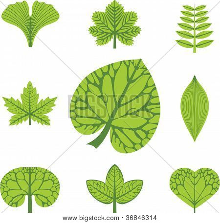 Different Types Of Leaves, Vector