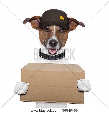 Posto de entrega de cão