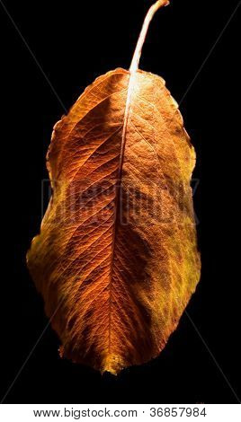 Autumn And The Leaf