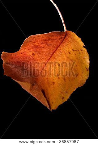 Leaf And Colors In Autumn
