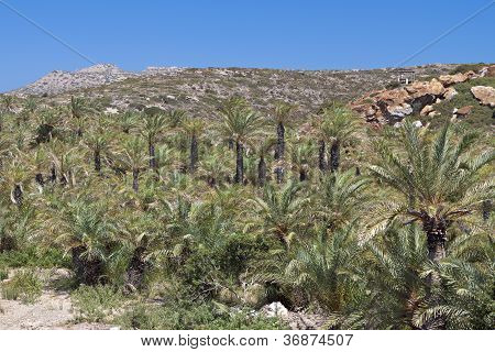 Vai forest at Crete island in Greece