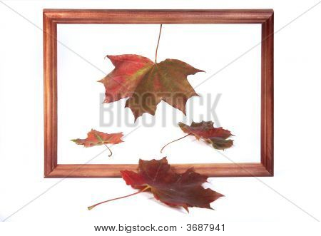 Four Maple Leaves