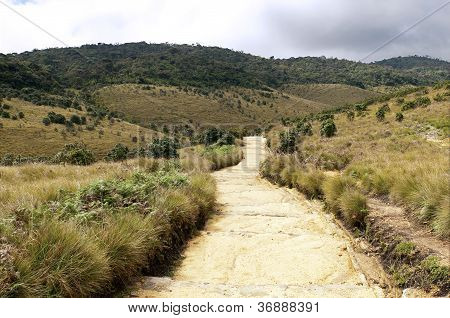 Mist Forest And Savanna, Horton Plains, Sri Lanka