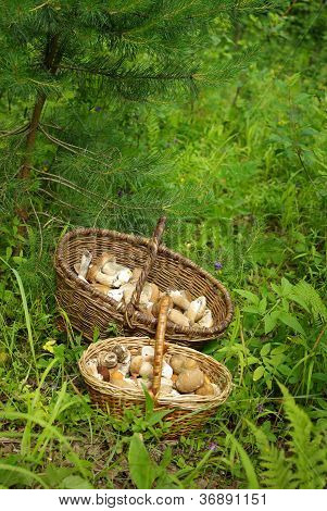 Mushrooms In A Basket In A Forest