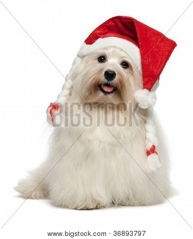 Happy Christmas Havanese Dog