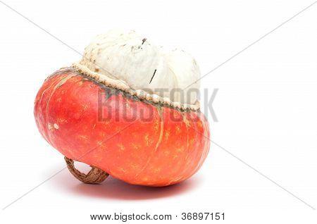 Mitre Pumpkin