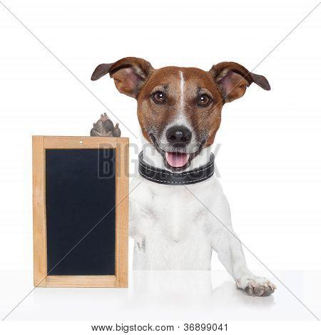 Board  Placeholder Banner Dog