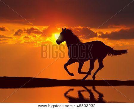 Paard met water reflectie tijdens zonsondergang
