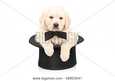 Cute puppy dog with bow tie posing in a top hat isolated on white background