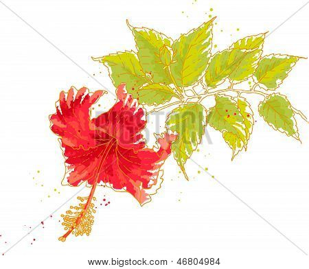 Hibiscus flower, isolated on white background