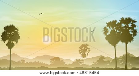 A Misty Landscape with Palm Trees and Sunset, Sunrise