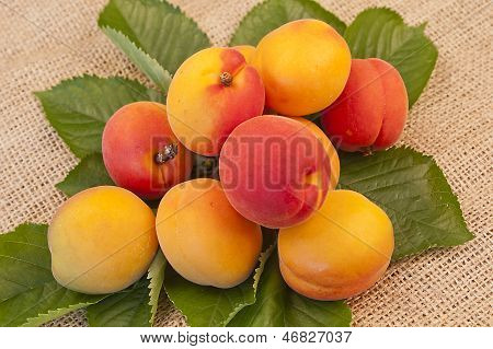 Delicious Apricots On Leaves