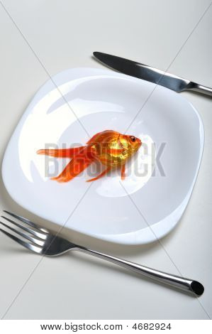 Pet In Plate