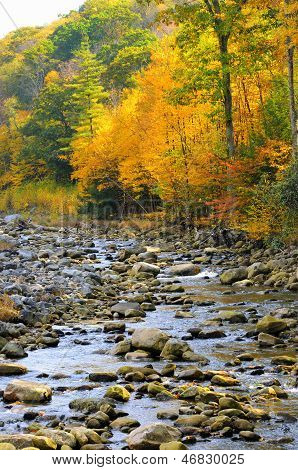Mountain Stream in Fall