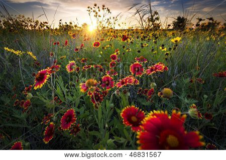 Luftige Dawn Over Texas Wildblumen