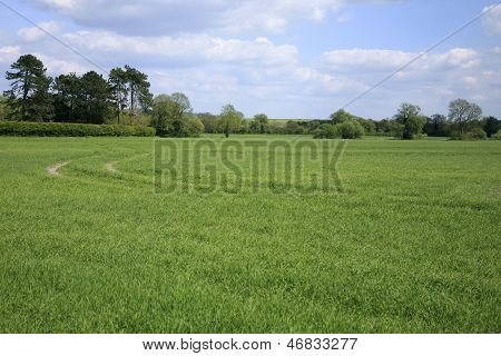 Countryside near Devizes in Wiltshire UK