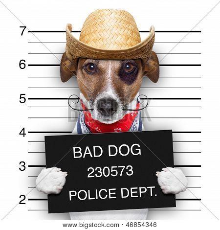 Bad Mexican Dog
