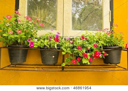 Colorful Vinca Flower In Pots