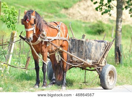 Rural horse harnessed to a cart.