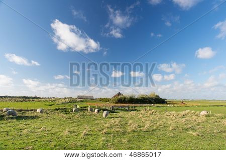 Landscape with sheep in the Horspolders at Dutch wadden island Texel