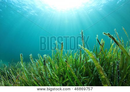 Underwater Sea Grass and Sun