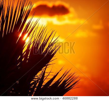 Palm tree leaves silhouette on beautiful orange sunset background, abstract floral border, tropical nature, exotic island, summer holidays and vacation concept