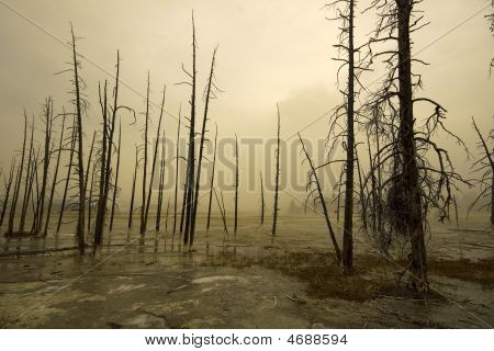 Yellowstone Foggy Landscape