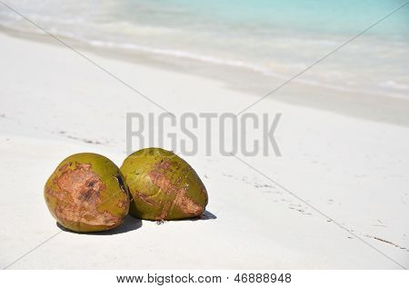 Pair of cocunuts on the beach. Bahamas