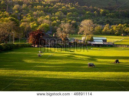 Bauernhof Haus Grasende Schafe
