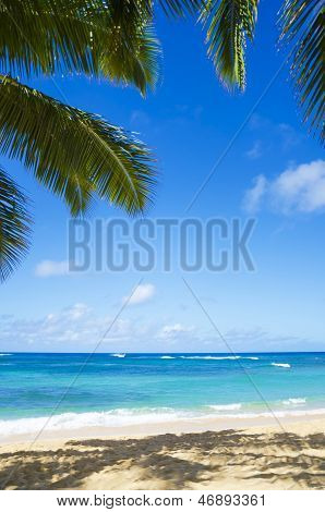 Palm Trees On The Sandy Beach In Hawaii