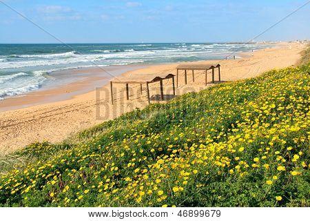 Yellow flowers and sandy beach along Mediterranean sea in Ashqelon, Israel.