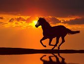 stock photo of reflection  - Horse running during sunset with water reflection - JPG