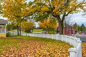 stock photo of fallen  - A residential street in a small town in America boasts a white picket fence and autumn foliage - JPG