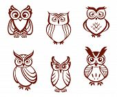 foto of owl eyes  - Set of cartoon owls for wisdom or education concept design - JPG