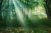 picture of mystical  - Mystical sun rays between trees in green forest - JPG